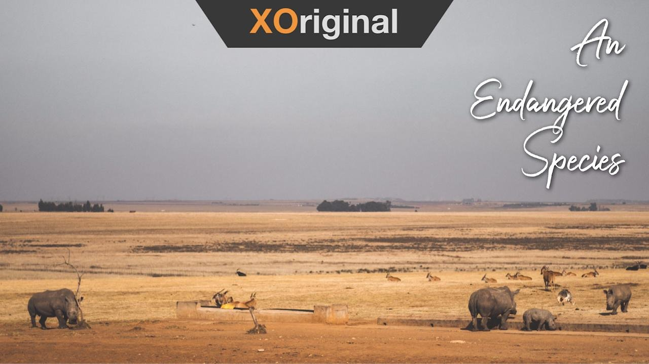 Video poster Rhino; An Endangered Species