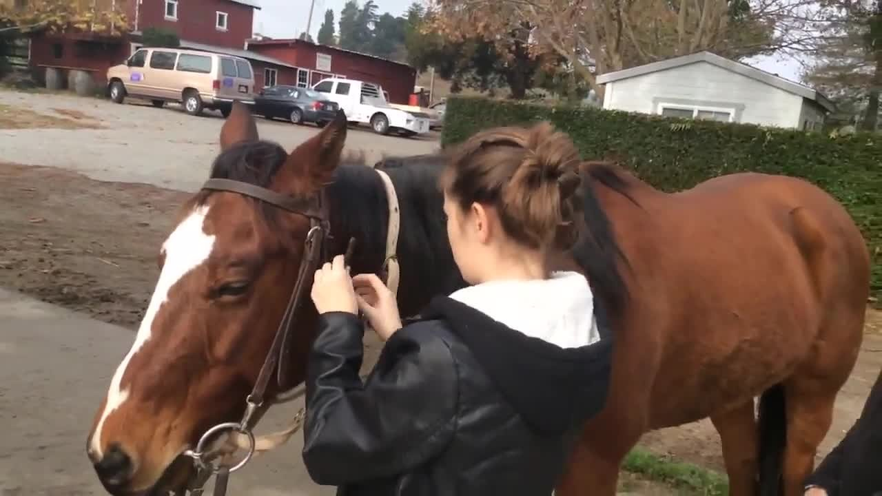 Video poster Bridel a Horse - Pac Point Class