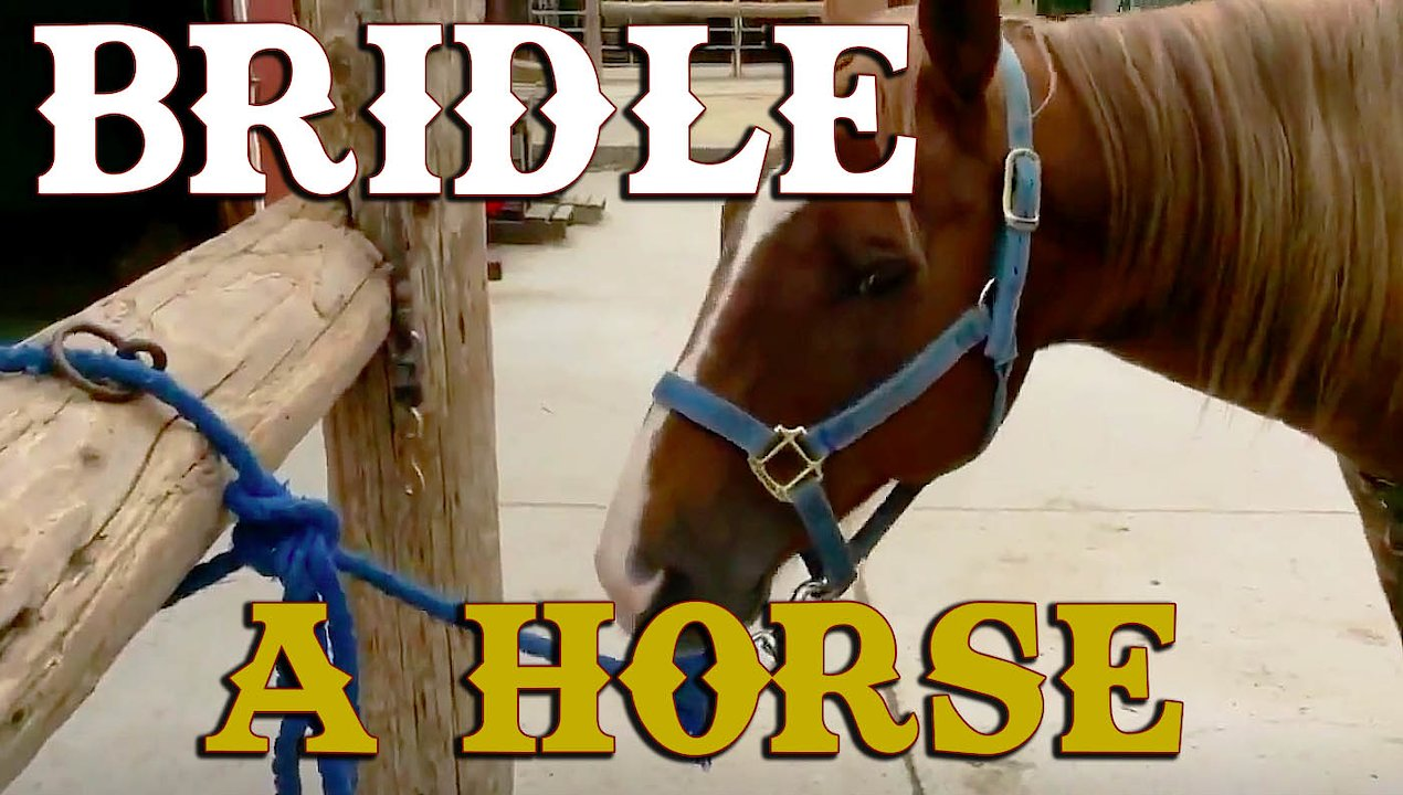 Video poster Bridle A Horse Pac Point Class
