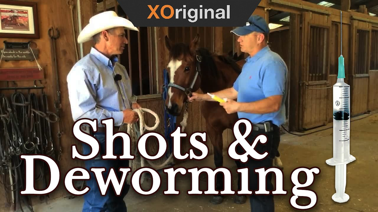 Video poster Dr. Doug: Shots and Deworming