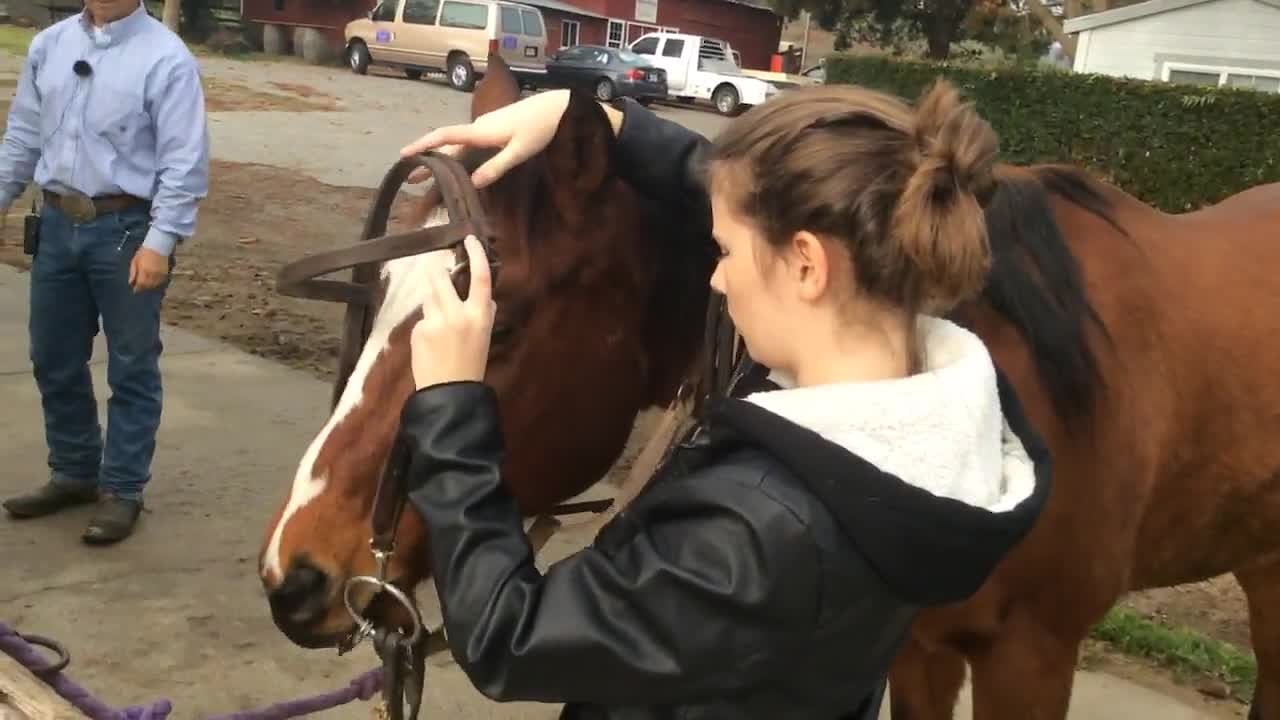 Video poster Halter A horse