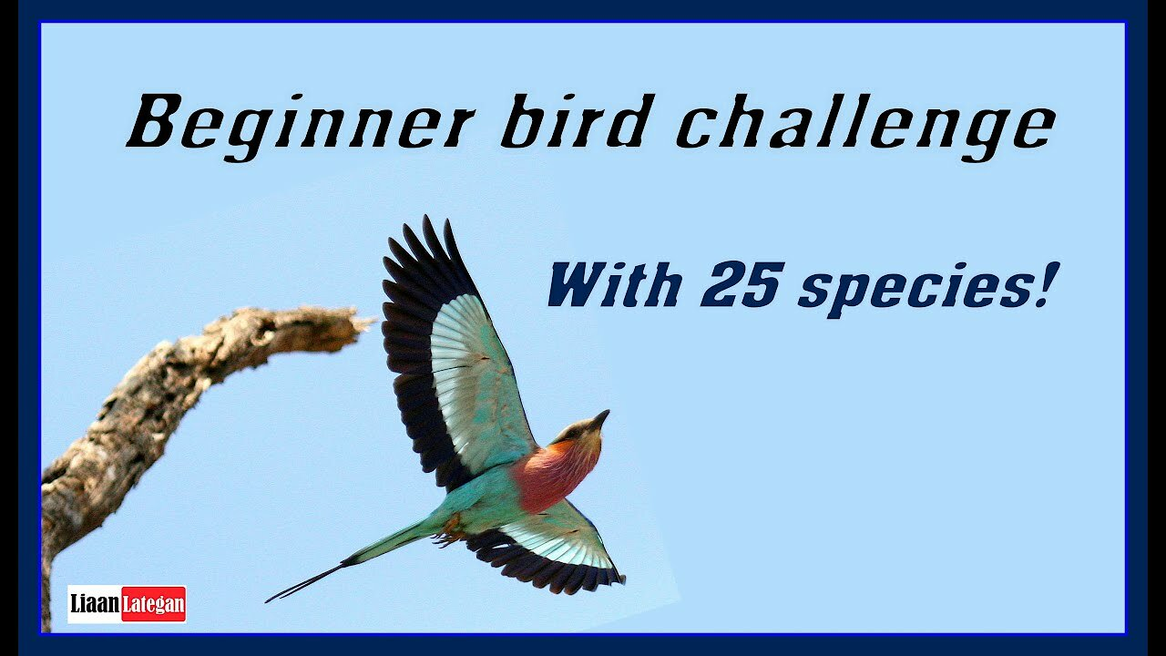 Video poster Beginner bird challenge (With 25 species!)