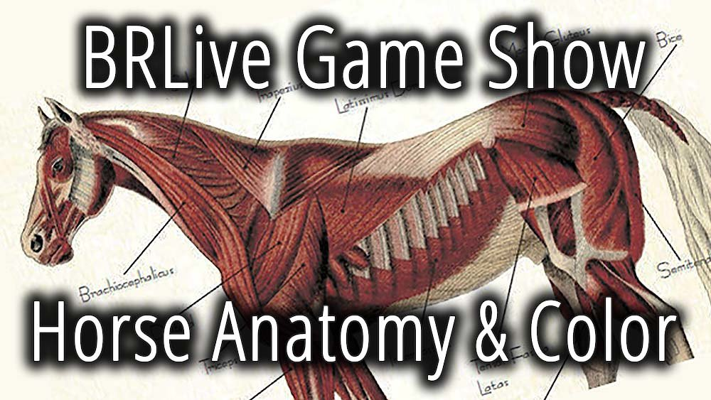 Video poster Game Show: Horse Anatomy & Color